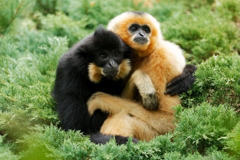 sainte-croix-gibbons_.jpg